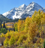 Rocky Mountain Foliage Photos
